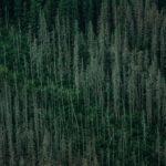 De liefde voor red cedar hout